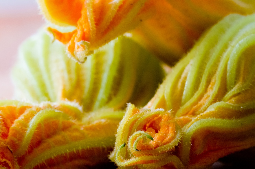 Torchio Pasta with Squash Blossoms-16