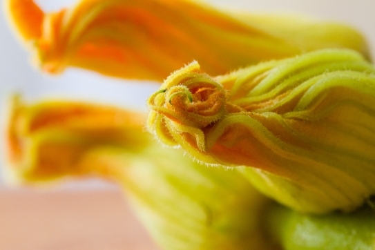 Torchio Pasta with Squash Blossoms-3