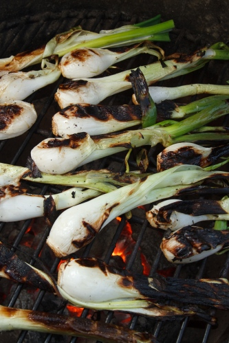 Grilled Spring Onions with Romesco TGF-27