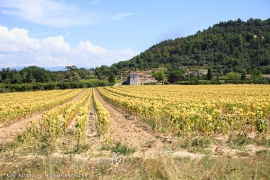 Bike Cook Eat Sleep Provence-6947