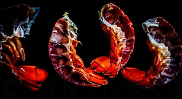 Lobster Stuffy-334-16466