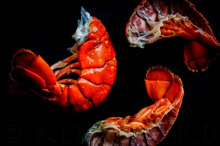 Lobster Stuffy-338-16470